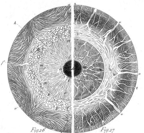 Eyeballs160