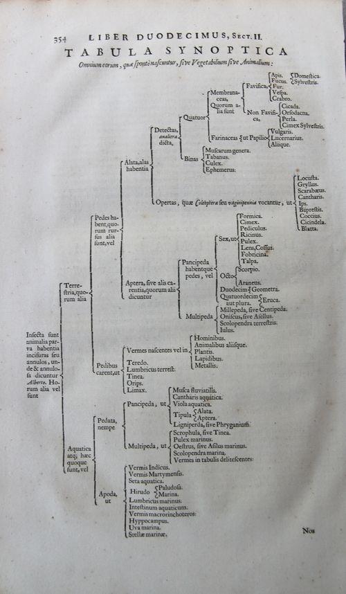 Kircher tabula synoptica