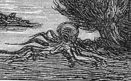 Octopus312