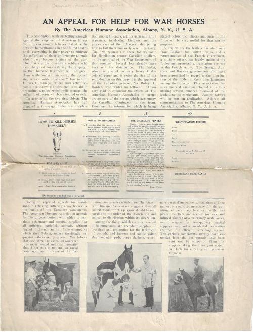 War horses_1_