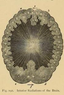 Brain light detail
