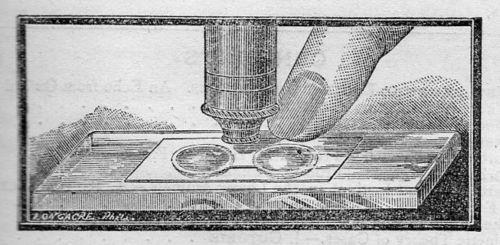 Microscpe binocular321