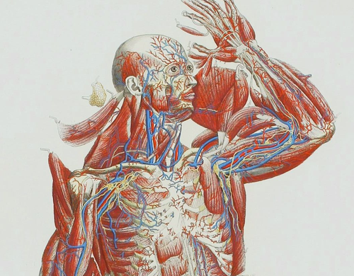 Anatomy mascagni three