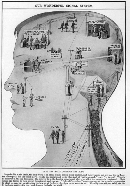 Map of the senses