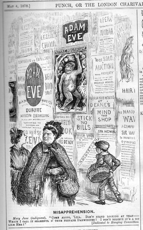 Punch darwin adam and eve 1878813