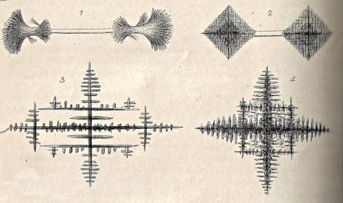 Found art microscopical monthly 1869.jpg copy