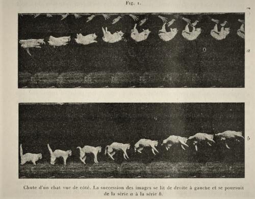 Marey cat 1894