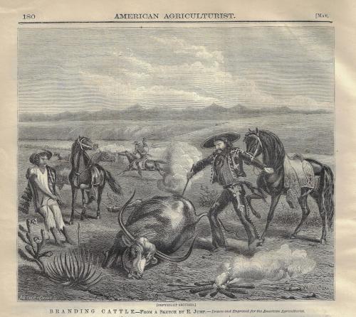 Cowboy 1870