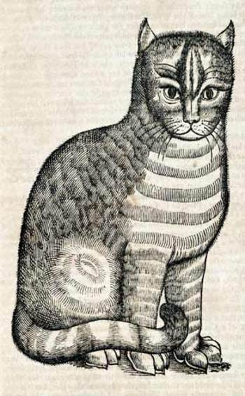 Topsellcat_2
